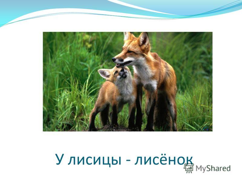 У лисицы - лисёнок