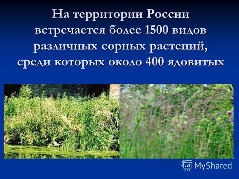Актуальность исследования обусловлена тем, что сорные растения могут быть не только засорителями сельско – хозяйственных культур, но и лекарственными растениями. Цель исследования: изучить основные сорные растения с учащимися начальных классов. Гипот