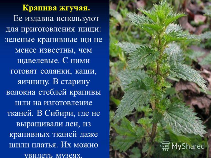 Подорожник большой. Растение растет по краям дорог и тропинок. Если вы в походе натрете ногу или поранитесь, размельчите листочек подорожника, приложите кашицу к ранке, прикройте другим листом - боль утихнет, ранка быстрее заживет. Такую же кашицу ис