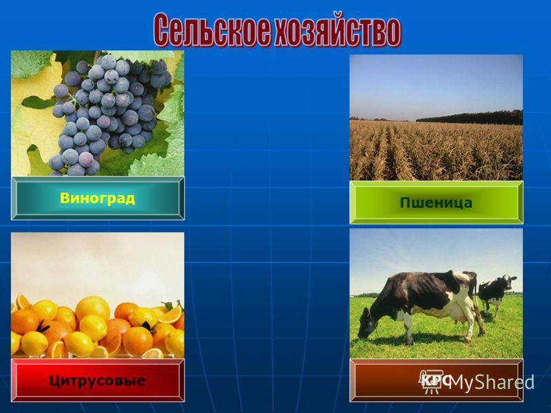 Цитрусовые Виноград КРС Пшеница