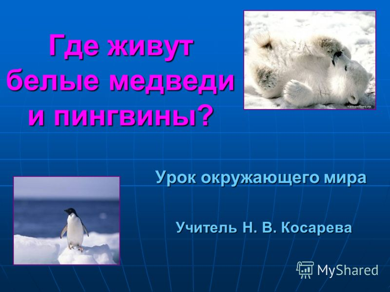 Где живут белые медведи и пингвины? Урок окружающего мира Учитель Н. В. Косарева
