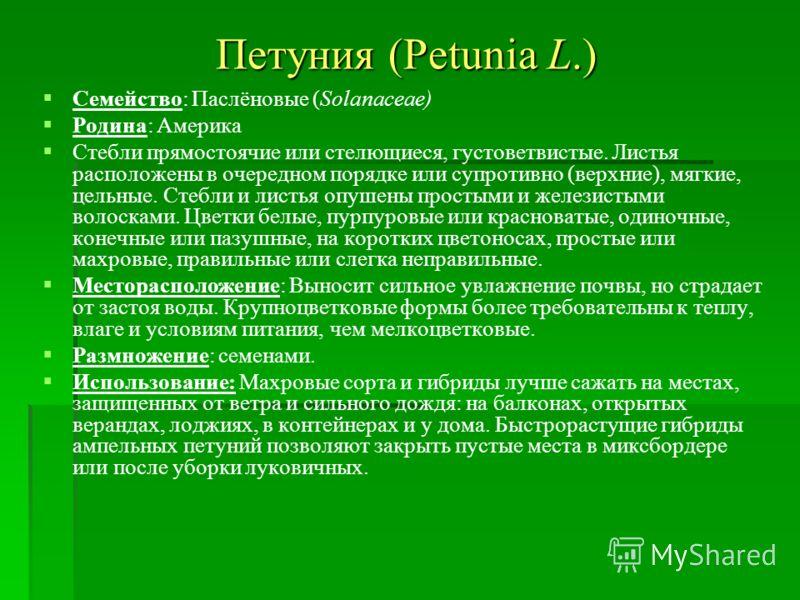 Петуния (Petunia L.) Семейство: Паслёновые (Solanaceae) Родина: Америка Стебли прямостоячие или стелющиеся, густоветвистые. Листья расположены в очередном порядке или супротивно (верхние), мягкие, цельные. Стебли и листья опушены простыми и железисты