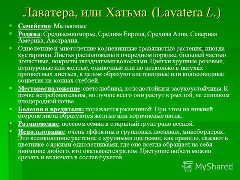 Лаватера, или Хатьма (Lavatera L.) Семейство: Мальвовые Родина: Средиземноморье, Средняя Европа, Средняя Азия, Северная Америка, Австралия. Однолетние и многолетние корневищные травянистые растения, иногда кустарники. Листья расположены в очередном п