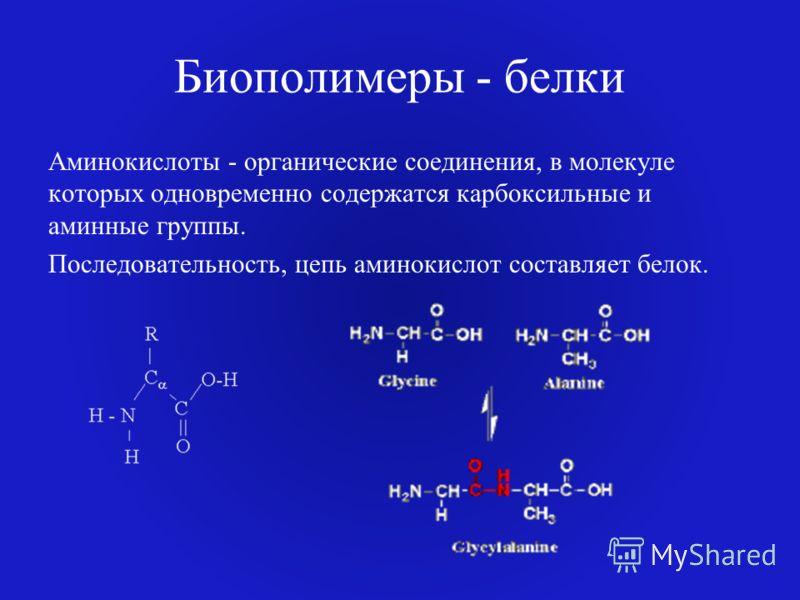 Биополимеры - белки Аминокислоты - органические соединения, в молекуле которых одновременно содержатся карбоксильные и аминные группы. Последовательность, цепь аминокислот составляет белок.