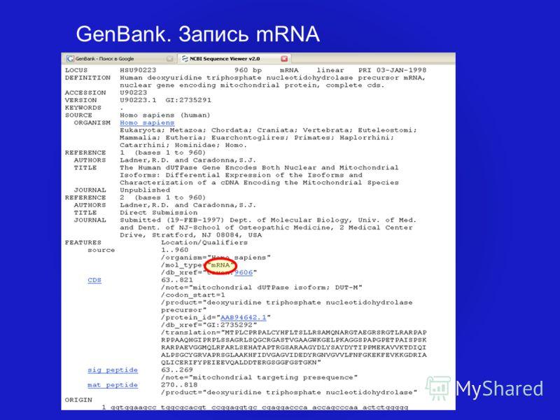 GenBank. Запись mRNA