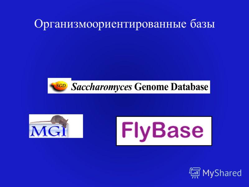 Организмоориентированные базы