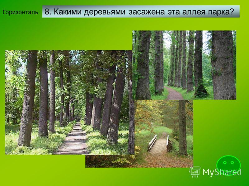 Горизонталь: 8. Какими деревьями засажена эта аллея парка?