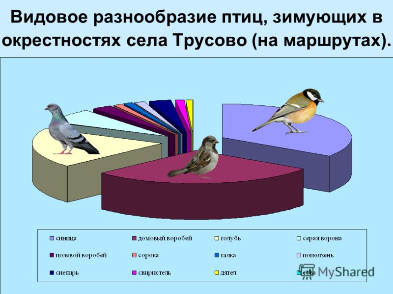 Видовое разнообразие птиц, зимующих в окрестностях села Трусово (на маршрутах).