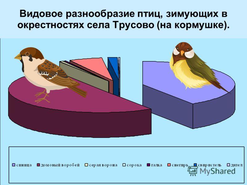 Видовое разнообразие птиц, зимующих в окрестностях села Трусово (на кормушке).