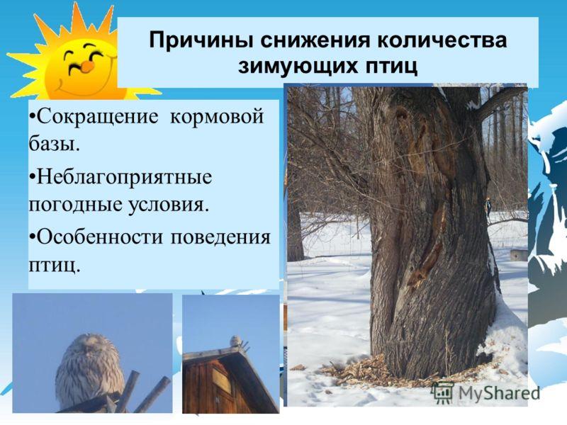 Причины снижения количества зимующих птиц Сокращение кормовой базы. Неблагоприятные погодные условия. Особенности поведения птиц.