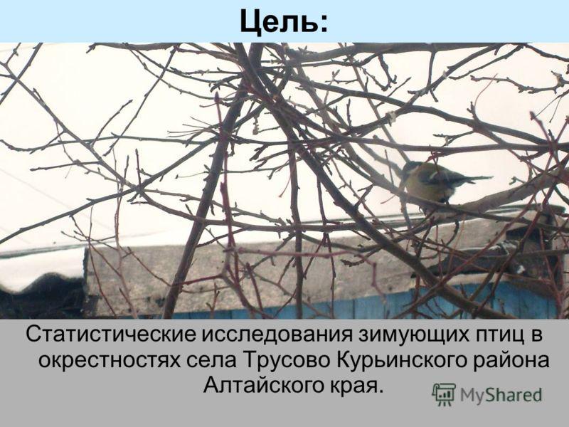 Зимующие птицы на алтае картинки