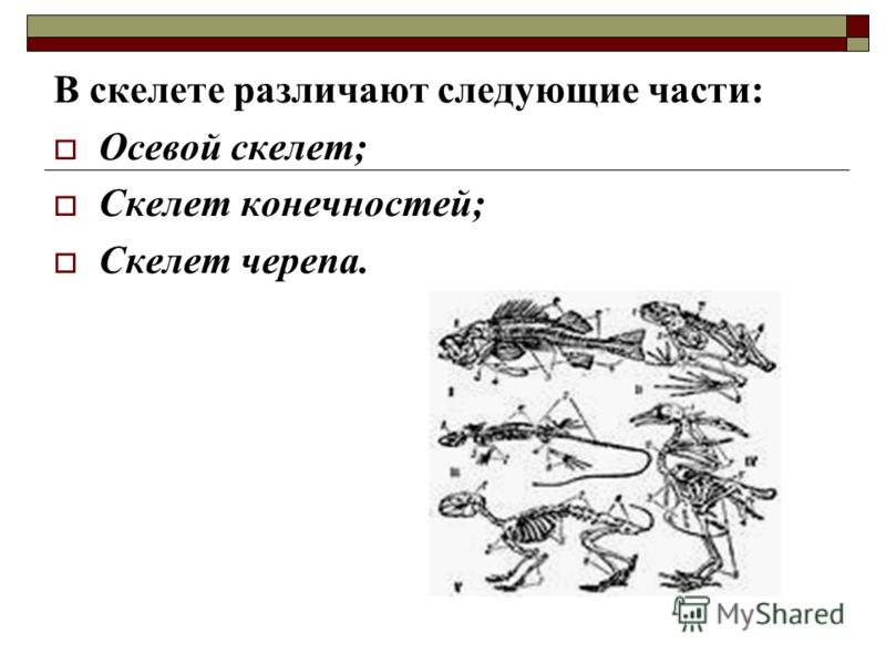 В скелете различают следующие части: Осевой скелет; Скелет конечностей; Скелет черепа.