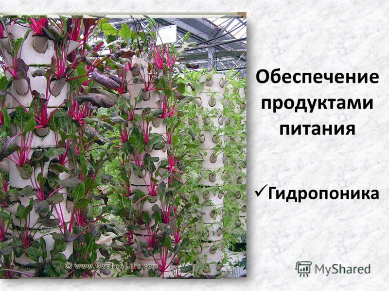 Обеспечение продуктами питания Гидропоника