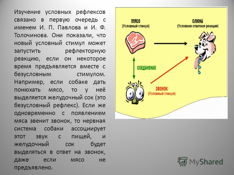 Изучение условных рефлексов связано в первую очередь с именем И. П. Павлова и И. Ф. Толочинова. Они показали, что новый условный стимул может запустить рефлекторную реакцию, если он некоторое время предъявляется вместе с безусловным стимулом. Наприме