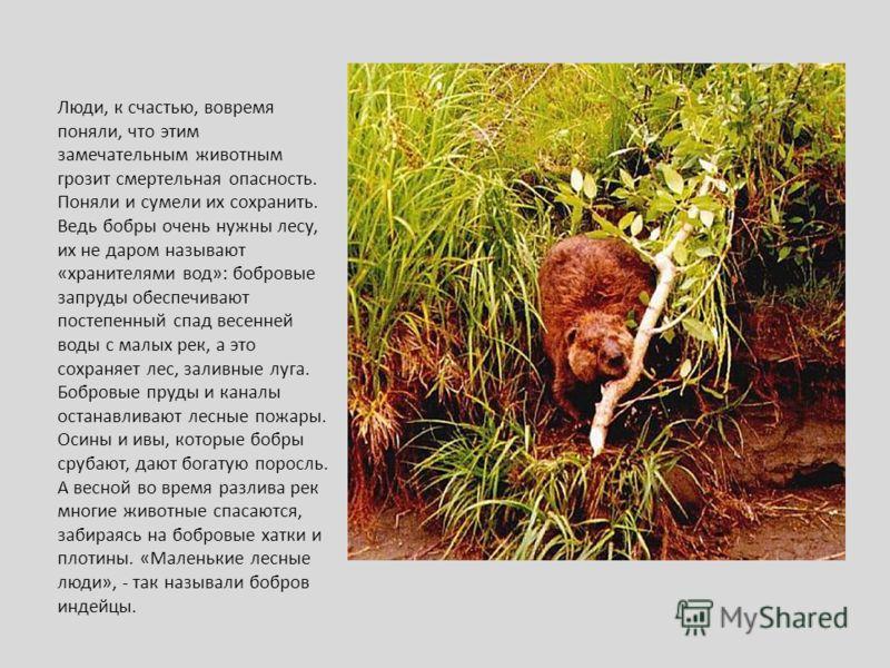Люди, к счастью, вовремя поняли, что этим замечательным животным грозит смертельная опасность. Поняли и сумели их сохранить. Ведь бобры очень нужны лесу, их не даром называют «хранителями вод»: бобровые запруды обеспечивают постепенный спад весенней