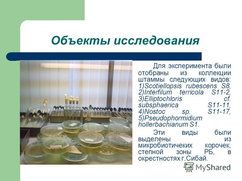Объекты исследования Для эксперимента были отобраны из коллекции штаммы следующих видов: 1)Scotiellopsis rubescens S8, 2)Interfilum terricola S11-2, 3)Elliptochloris cf. subsphaerica S11-11, 4)Nostoc sp. S11-17, 5)Pseudophormidium hollerbachianum S1.