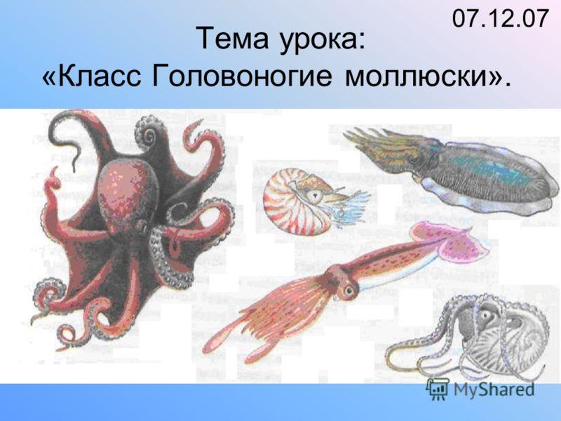 Тема урока: «Класс Головоногие моллюски». 07.12.07
