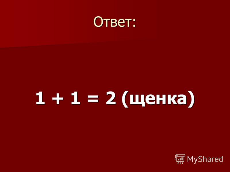 Ответ: 1 + 1 = 2 (щенка)