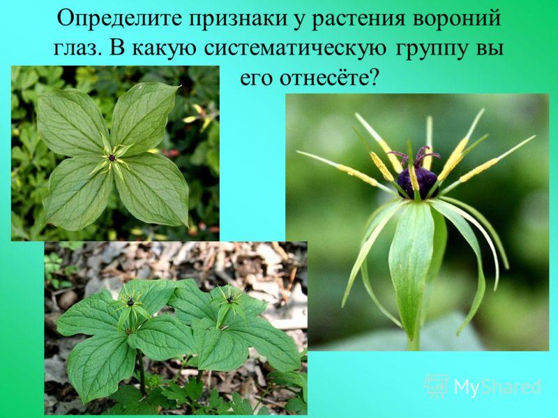 Определите признаки у растения вороний глаз. В какую систематическую группу вы его отнесёте?