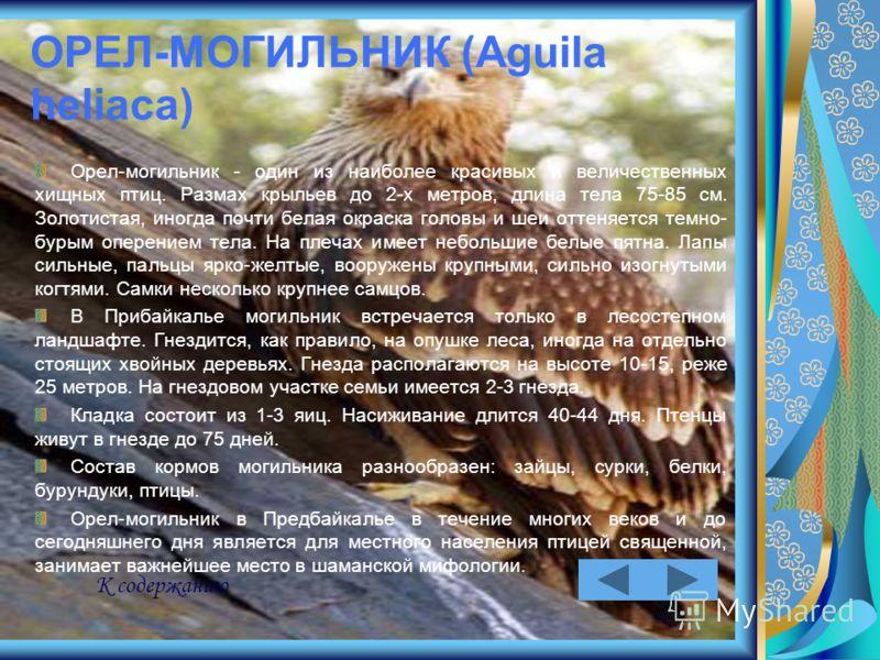 ОРЕЛ-МОГИЛЬНИК (Aguila heliaca) Орел-могильник - один из наиболее красивых и величественных хищных птиц. Размах крыльев до 2-х метров, длина тела 75-85 см. Золотистая, иногда почти белая окраска головы и шеи оттеняется темно- бурым оперением тела. На