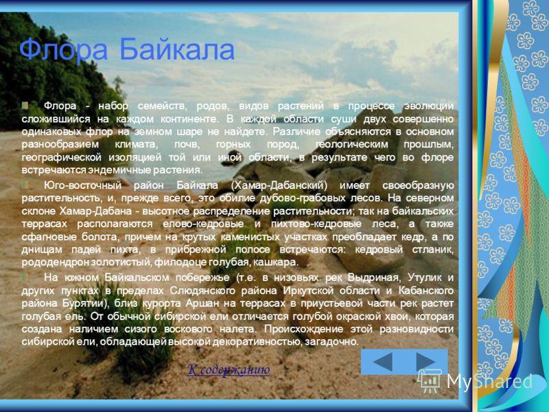 Флора Байкала Флора - набор семейств, родов, видов растений в процессе эволюции сложившийся на каждом континенте. В каждой области суши двух совершенно одинаковых флор на земном шаре не найдете. Различие объясняются в основном разнообразием климата,