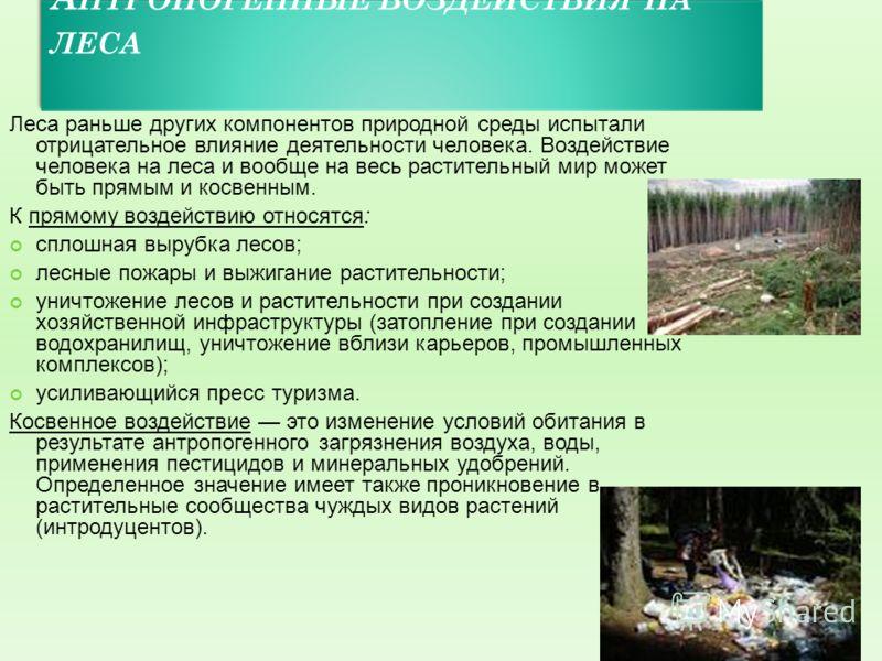 А НТРОПОГЕННЫЕ ВОЗДЕЙСТВИЯ НА ЛЕСА Леса раньше других компонентов природной среды испытали отрицательное влияние деятельности человека. Воздействие человека на леса и вообще на весь растительный мир может быть прямым и косвенным. К прямому воздействи