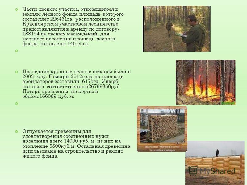 Части лесного участка, относящегося к землям лесного фонда площадь которого составляет 226461га, расположенного в Красноярском участковом лесничестве предоставляются в аренду по договору- 188124 га лесных насаждений, для местного населения площадь ле