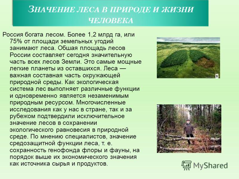 З НАЧЕНИЕ ЛЕСА В ПРИРОДЕ И ЖИЗНИ ЧЕЛОВЕКА Россия богата лесом. Более 1,2 млрд га, или 75% от площади земельных угодий занимают леса. Обшая площадь лесов России составляет сегодня значительную часть всех лесов Земли. Это самые мощные легкие планеты из
