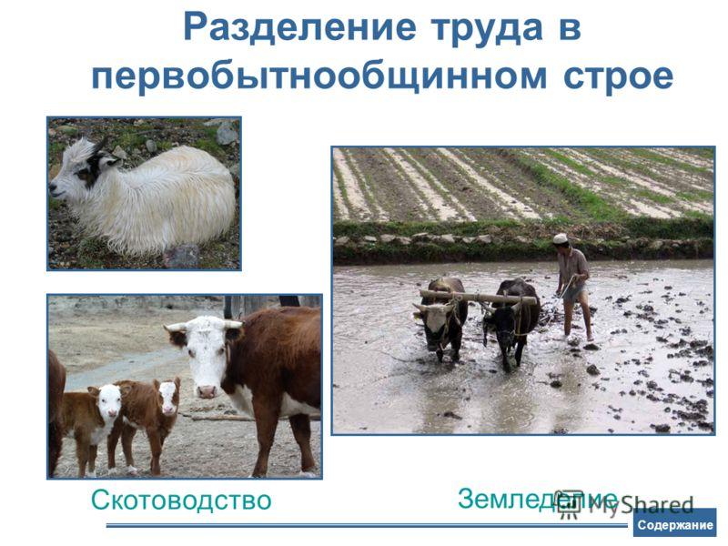 Разделение труда в первобытнообщинном строе Скотоводство Земледелие Содержание