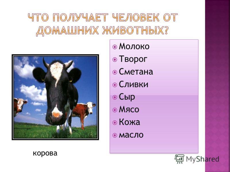Молоко Творог Сметана Сливки Сыр Мясо Кожа масло Молоко Творог Сметана Сливки Сыр Мясо Кожа масло корова