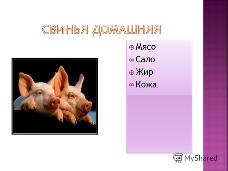 Мясо Сало Жир Кожа Мясо Сало Жир Кожа