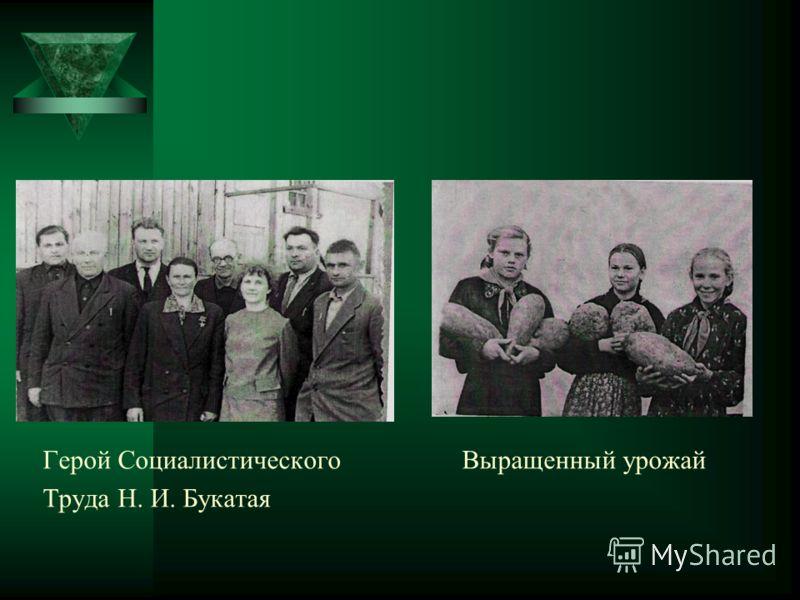Герой Социалистического Выращенный урожай Труда Н. И. Букатая