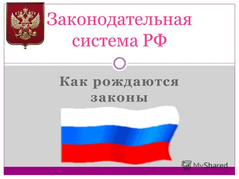 Как рождаются законы Законодательная система РФ