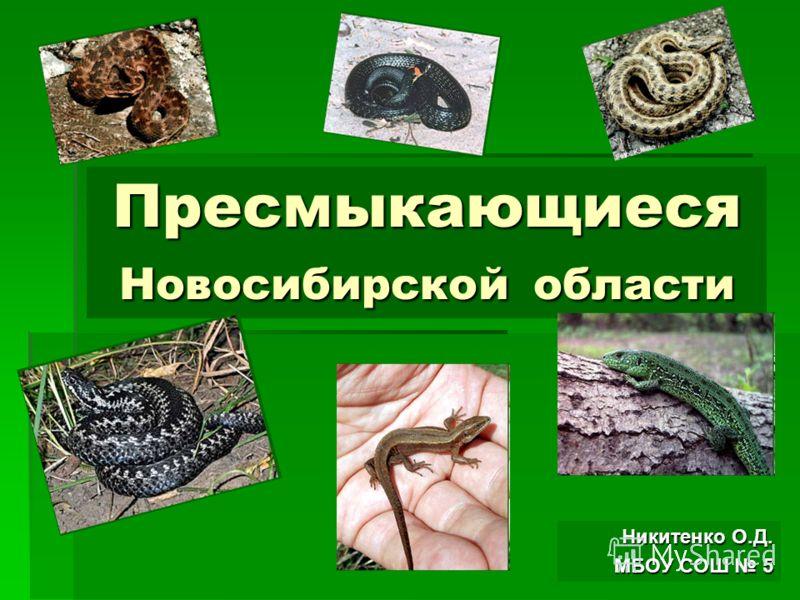 Пресмыкающиеся Новосибирской области Никитенко О.Д. МБОУ СОШ 5