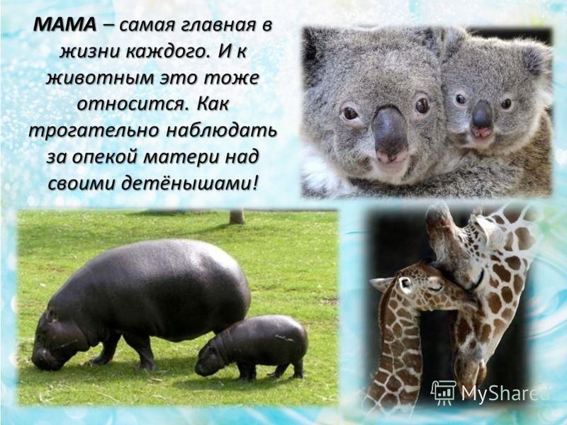 МАМА – cамая главная в жизни каждого. И к животным это тоже относится. Как трогательно наблюдать за опекой матери над своими детёнышами!