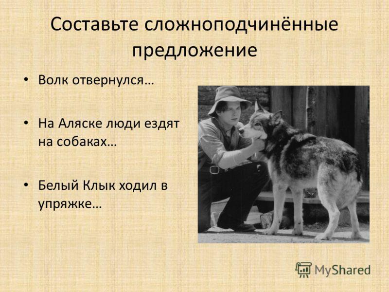Составьте сложноподчинённые предложение Волк отвернулся… На Аляске люди ездят на собаках… Белый Клык ходил в упряжке…