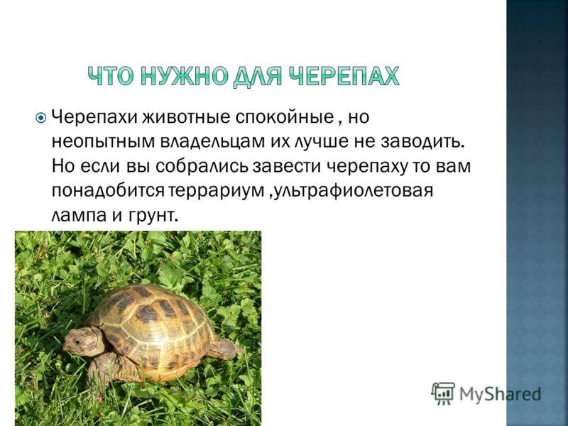 Среднеазиатских черепах часто держат дома. Для них нужны особые условия.