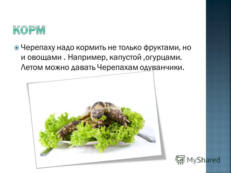 Черепахам нужно тепло, и чтобы предоставить черепахам жить в тепле можно купить ультрафиолетовую лампу.
