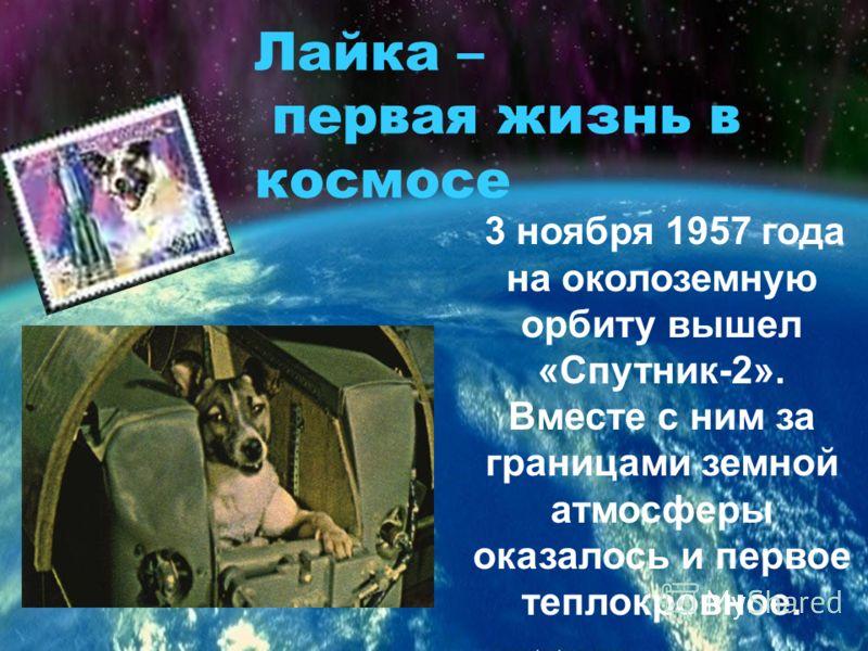 3 ноября 1957 года на околоземную орбиту вышел «Спутник-2». Вместе с ним за границами земной атмосферы оказалось и первое теплокровное. Лайка – первая жизнь в космосе