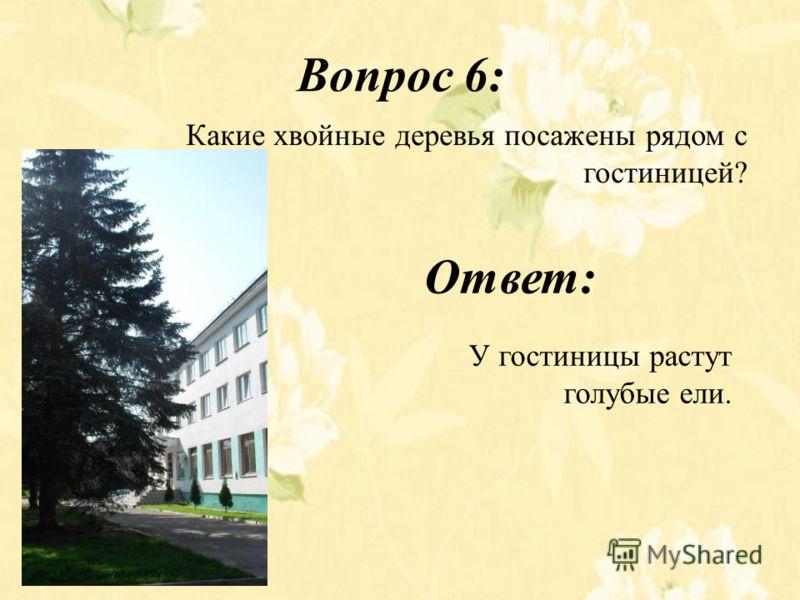 Вопрос 6: Какие хвойные деревья посажены рядом с гостиницей? Ответ: У гостиницы растут голубые ели.