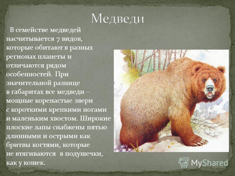 В семействе медведей насчитывается 7 видов, которые обитают в разных регионах планеты и отличаются рядом особенностей. При значительной разнице в габаритах все медведи – мощные коренастые звери с короткими крепкими ногами и маленьким хвостом. Широкие