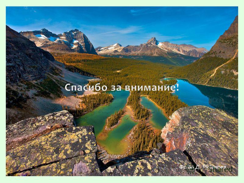 Фото Д. Рудакова