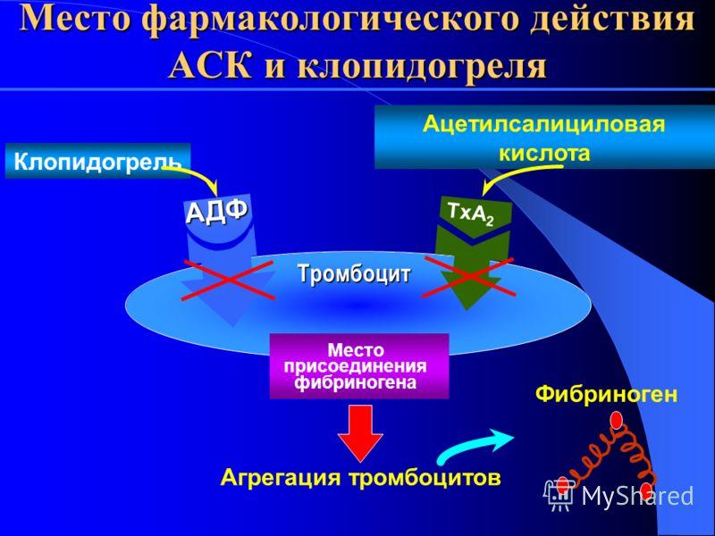 Место фармакологического действия АСК и клопидогреля Агрегация тромбоцитов Фибриноген TxA 2 Место присоединения фибриногена АДФ Тромбоцит Клопидогрель Ацетилсалициловая кислота