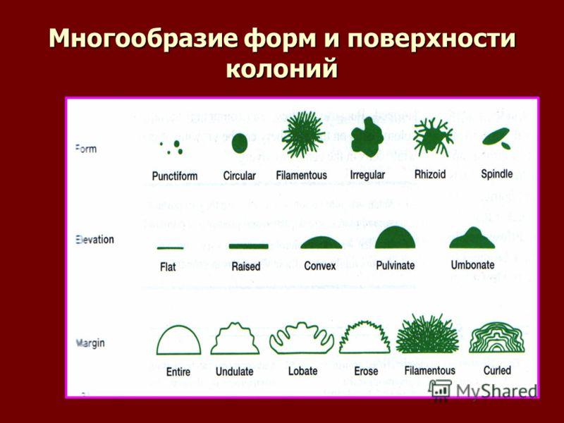 Многообразие форм и поверхности колоний