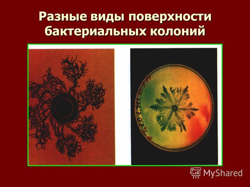 Разные виды поверхности бактериальных колоний
