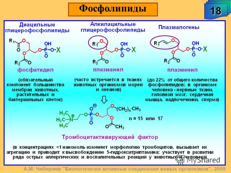 18 Фосфолипиды А.М. Чибиряев Биологически активные соединения живых организмов, 2009