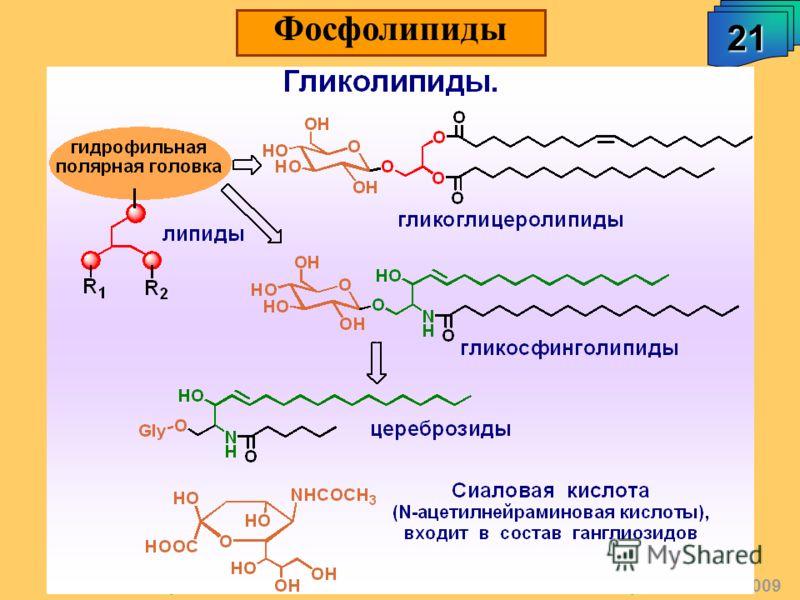 А.М. Чибиряев Биологически активные соединения живых организмов, 2009 21 Фосфолипиды