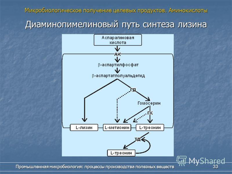 Промышленная микробиология: процессы производства полезных веществ 33 Диаминопимелиновый путь синтеза лизина Микробиологическое получение целевых продуктов. Аминокислоты