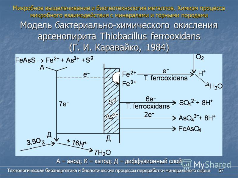Технологическая биоэнергетика и биологические процессы переработки минерального сырья 57 Микробное выщелачивание и биогеотехнология металлов. Химизм процесса микробного взаимодействия с минералами и горными породами Модель бактериально-химического ок