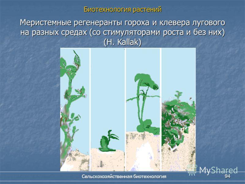 Сельскохозяйственная биотехнология 94 Меристемные регенеранты гороха и клевера лугового на разных средах (со стимуляторами роста и без них) (H. Kallak) Биотехнология растений